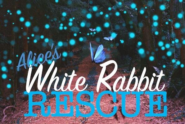Alice's White Rabbit Rescue