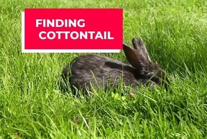 Квест Finding Cottontail