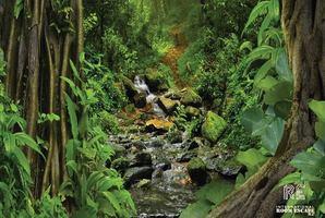 Квест Amazon Rainforest