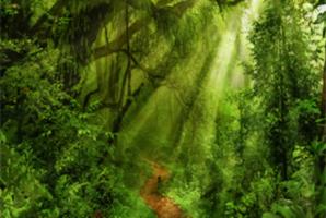 Квест Jungle