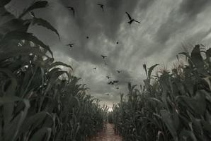 Квест The Farm