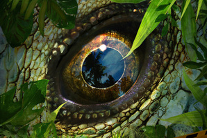 Квест Jurassic Land