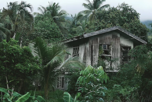 Квест Jungle Escape