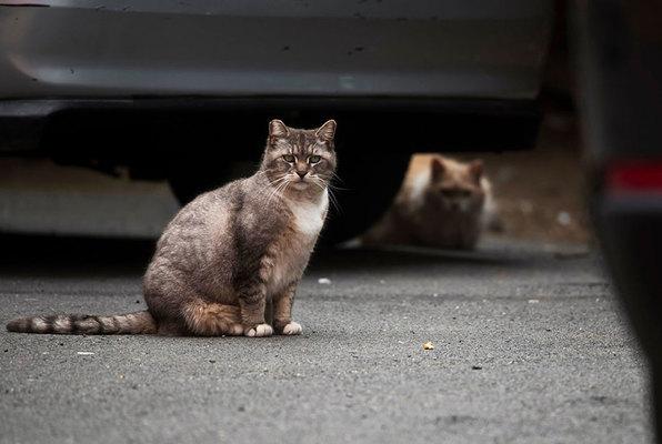 Die Katzeninsel