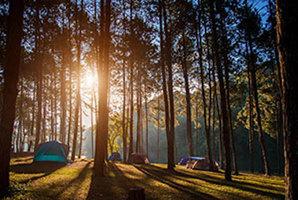Квест Camping Escape Room