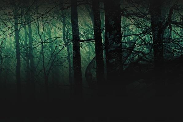 Láthatatlan Erdő