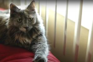 Квест Crazy Cat Lady