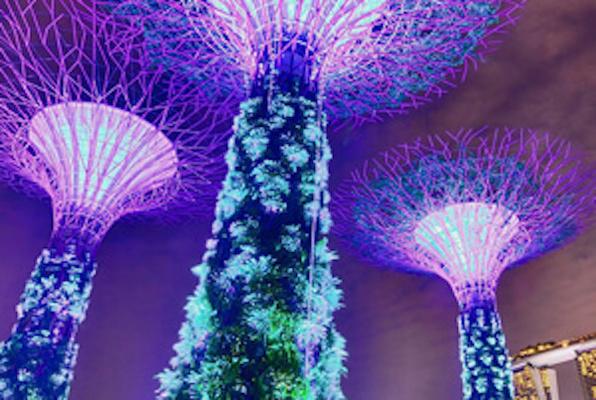 Geheimbund Singapur Online
