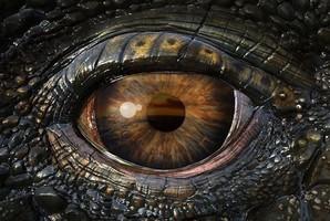 Квест Belly of the Beast: Awakening the Dragon