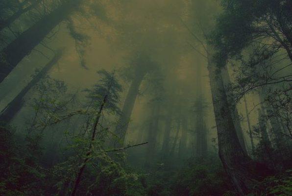 La Cabaña de las Brujas