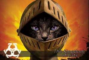 Квест The Kingdom of Cats