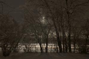 Квест Kingdom of Night