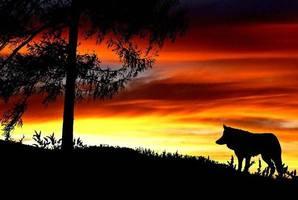 Квест Uur van de Wolf