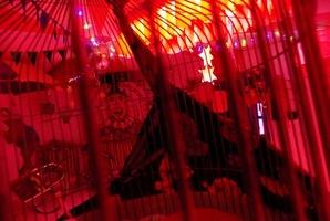 Квест Borzadályos Cirkusz