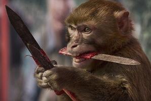 Квест Monkey See