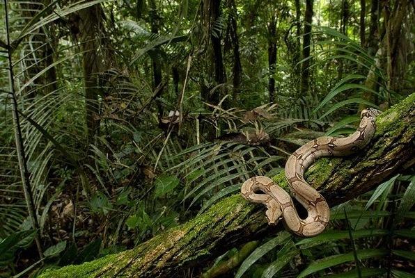 The Jungle Game Escape